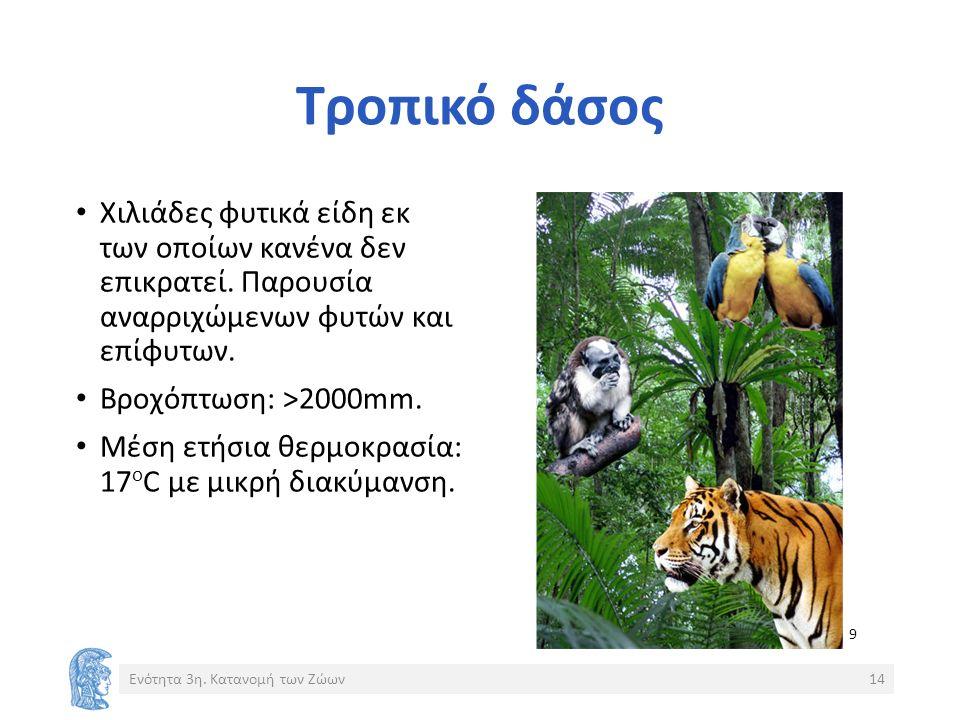 Τροπικό δάσος Χιλιάδες φυτικά είδη εκ των οποίων κανένα δεν επικρατεί.