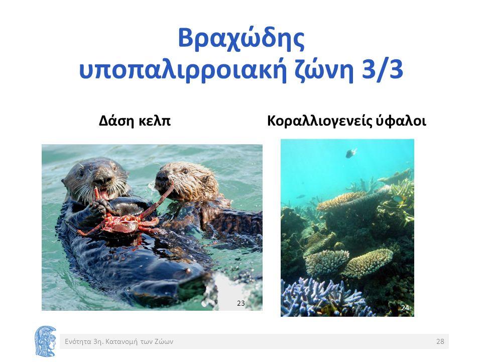 Βραχώδης υποπαλιρροιακή ζώνη 3/3 Δάση κελπΚοραλλιογενείς ύφαλοι Ενότητα 3η.