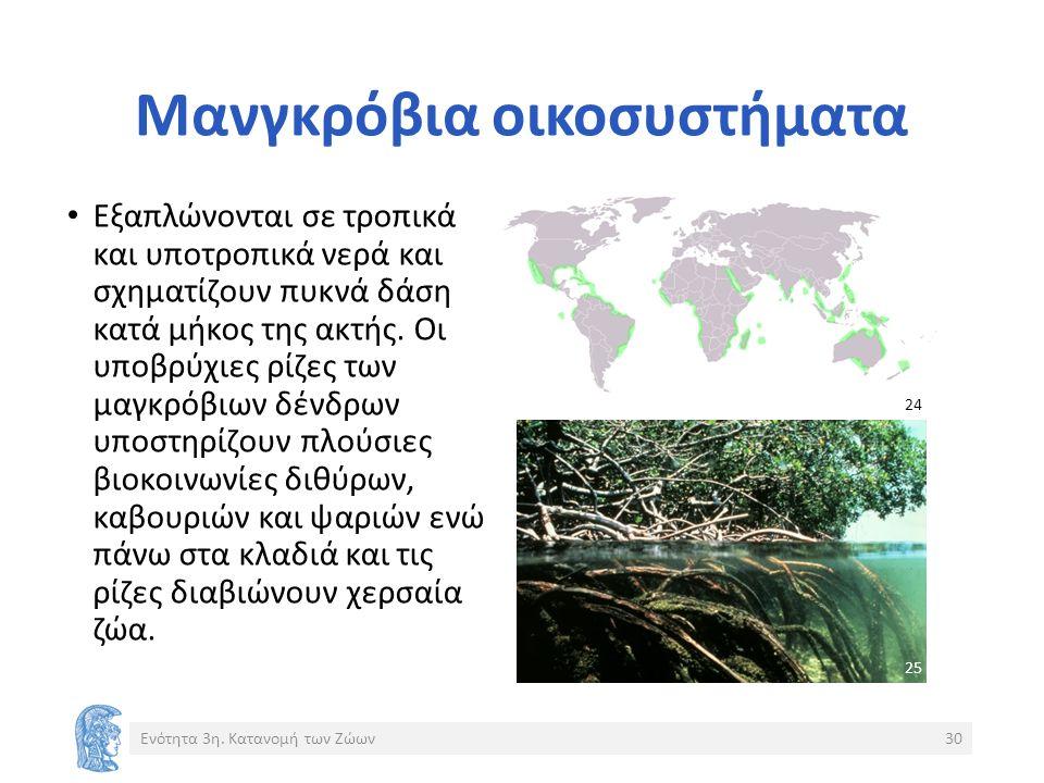 Μανγκρόβια οικοσυστήματα Εξαπλώνονται σε τροπικά και υποτροπικά νερά και σχηματίζουν πυκνά δάση κατά μήκος της ακτής.