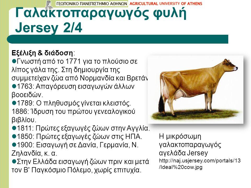 Γαλακτοπαραγωγός φυλή Jersey 2/4 Εξέλιξη & διάδοση: Γνωστή από το 1771 για το πλούσιο σε λίπος γάλα της.