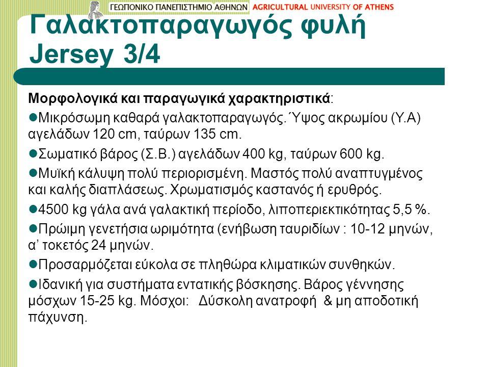Γαλακτοπαραγωγός φυλή Jersey 3/4 Μορφολογικά και παραγωγικά χαρακτηριστικά: Μικρόσωμη καθαρά γαλακτοπαραγωγός.