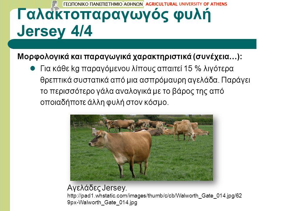 Γαλακτοπαραγωγός φυλή Jersey 4/4 Μορφολογικά και παραγωγικά χαρακτηριστικά (συνέχεια…): Για κάθε kg παραγόμενου λίπους απαιτεί 15 % λιγότερα θρεπτικά συστατικά από μια ασπρόμαυρη αγελάδα.