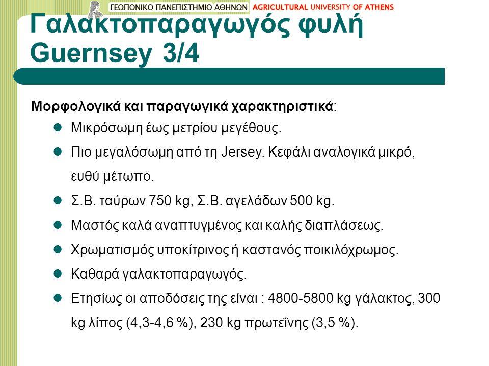 Γαλακτοπαραγωγός φυλή Guernsey 3/4 Μορφολογικά και παραγωγικά χαρακτηριστικά: Μικρόσωμη έως μετρίου μεγέθους.
