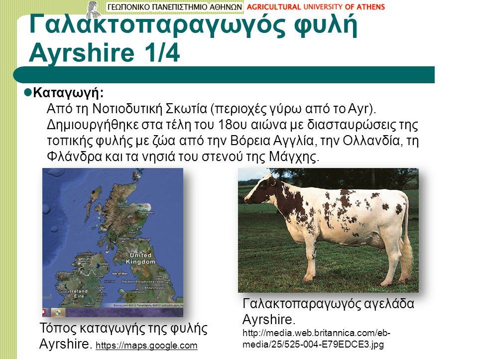 Γαλακτοπαραγωγός φυλή Ayrshire 1/4 Καταγωγή: Από τη Νοτιοδυτική Σκωτία (περιοχές γύρω από το Ayr).