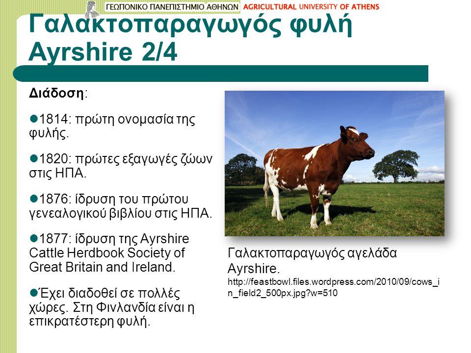 Γαλακτοπαραγωγός φυλή Ayrshire 2/4 Διάδοση: 1814: πρώτη ονομασία της φυλής.