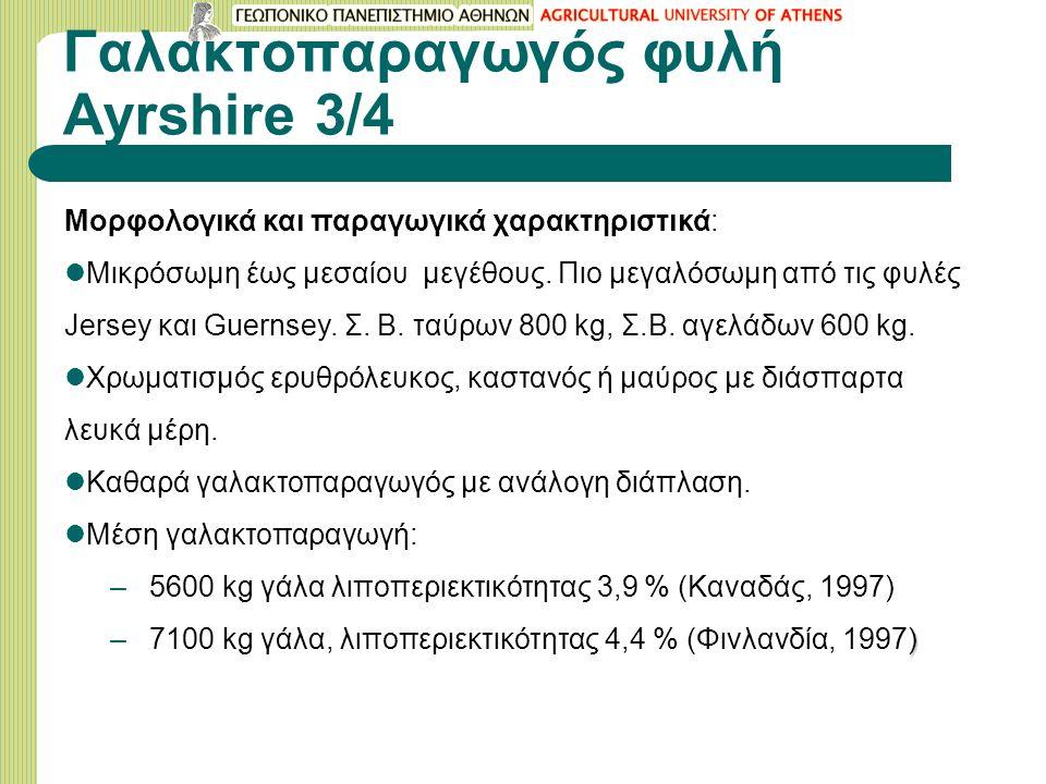 Γαλακτοπαραγωγός φυλή Ayrshire 3/4 Μορφολογικά και παραγωγικά χαρακτηριστικά: Μικρόσωμη έως μεσαίου μεγέθους.