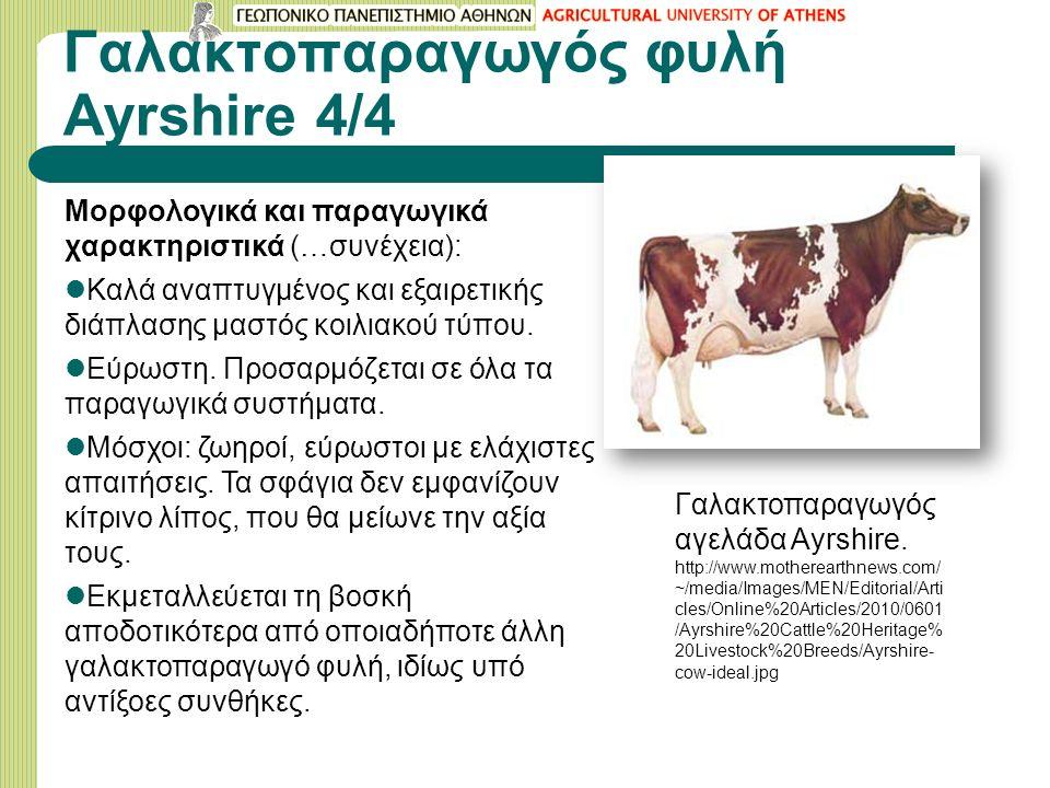Γαλακτοπαραγωγός φυλή Ayrshire 4/4 Moρφολογικά και παραγωγικά χαρακτηριστικά (…συνέχεια): Καλά αναπτυγμένος και εξαιρετικής διάπλασης μαστός κοιλιακού τύπου.