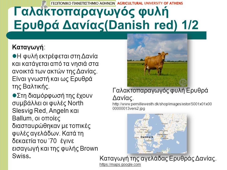 Γαλακτοπαραγωγός φυλή Eρυθρά Δανίας(Danish red) 1/2 Καταγωγή: H φυλή εκτρέφεται στη Δανία και κατάγεται από τα νησιά στα ανοικτά των ακτών της Δανίας.