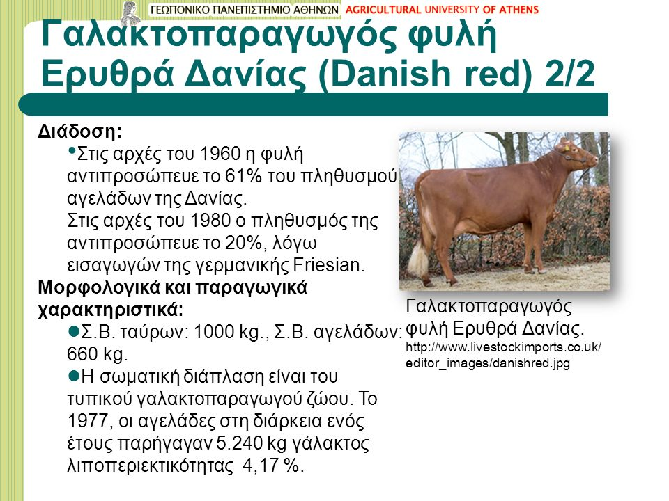 Γαλακτοπαραγωγός φυλή Eρυθρά Δανίας (Danish red) 2/2 Διάδοση: Στις αρχές του 1960 η φυλή αντιπροσώπευε το 61% του πληθυσμού αγελάδων της Δανίας.