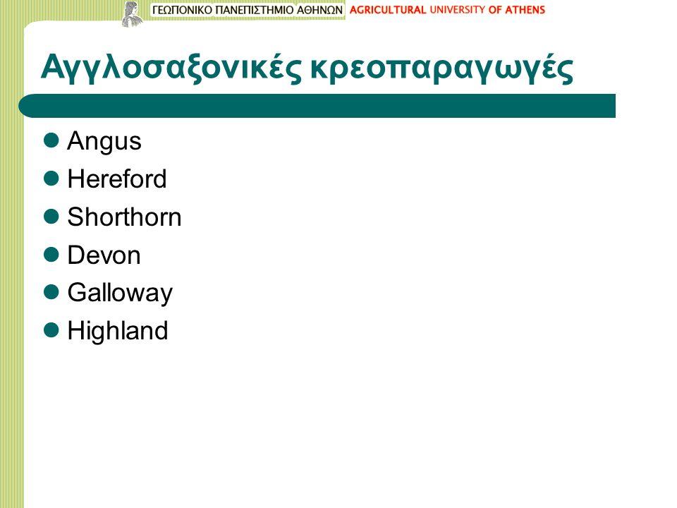 Αγγλoσαξονικές κρεοπαραγωγές Angus Hereford Shorthorn Devon Galloway Highland