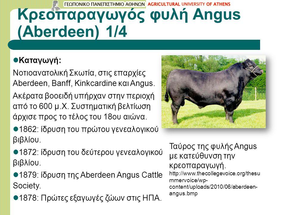 Κρεοπαραγωγός φυλή Angus (Aberdeen) 1/4 Καταγωγή: Νοτιοανατολική Σκωτία, στις επαρχίες Aberdeen, Banff, Kinkcardine και Angus.