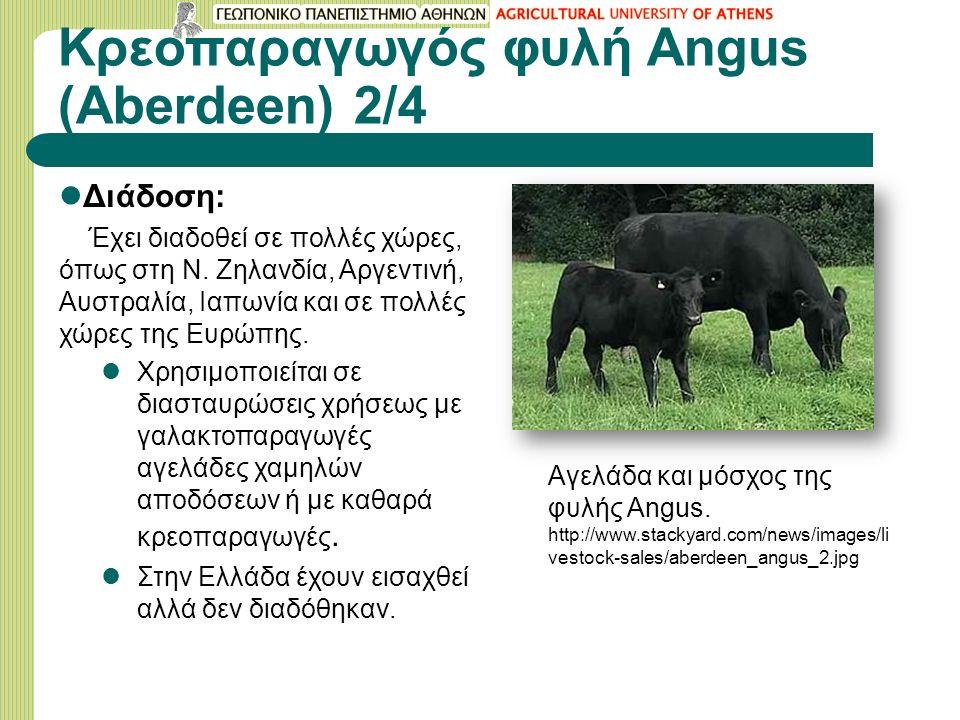 Κρεοπαραγωγός φυλή Angus (Aberdeen) 2/4 Διάδοση: Έχει διαδοθεί σε πολλές χώρες, όπως στη Ν.