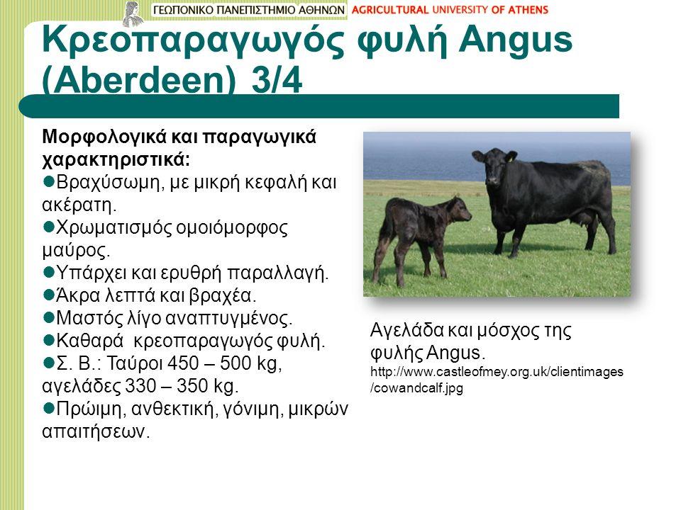 Κρεοπαραγωγός φυλή Angus (Aberdeen) 3/4 Μορφολογικά και παραγωγικά χαρακτηριστικά: Βραχύσωμη, με μικρή κεφαλή και ακέρατη.
