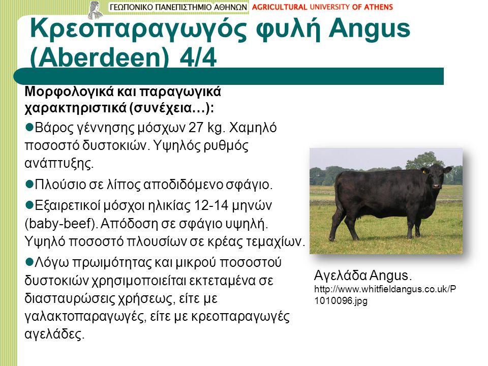 Κρεοπαραγωγός φυλή Angus (Aberdeen) 4/4 Μορφολογικά και παραγωγικά χαρακτηριστικά (συνέχεια…): Βάρος γέννησης μόσχων 27 kg.