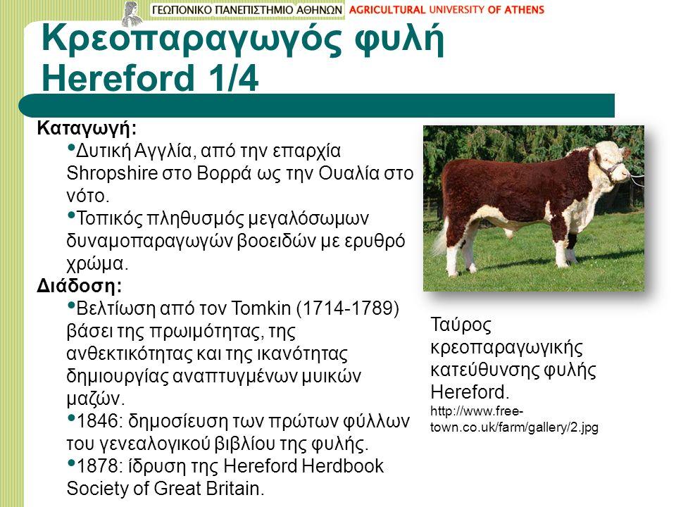 Κρεοπαραγωγός φυλή Hereford 1/4 Καταγωγή: Δυτική Αγγλία, από την επαρχία Shropshire στο Βορρά ως την Ουαλία στο νότο.