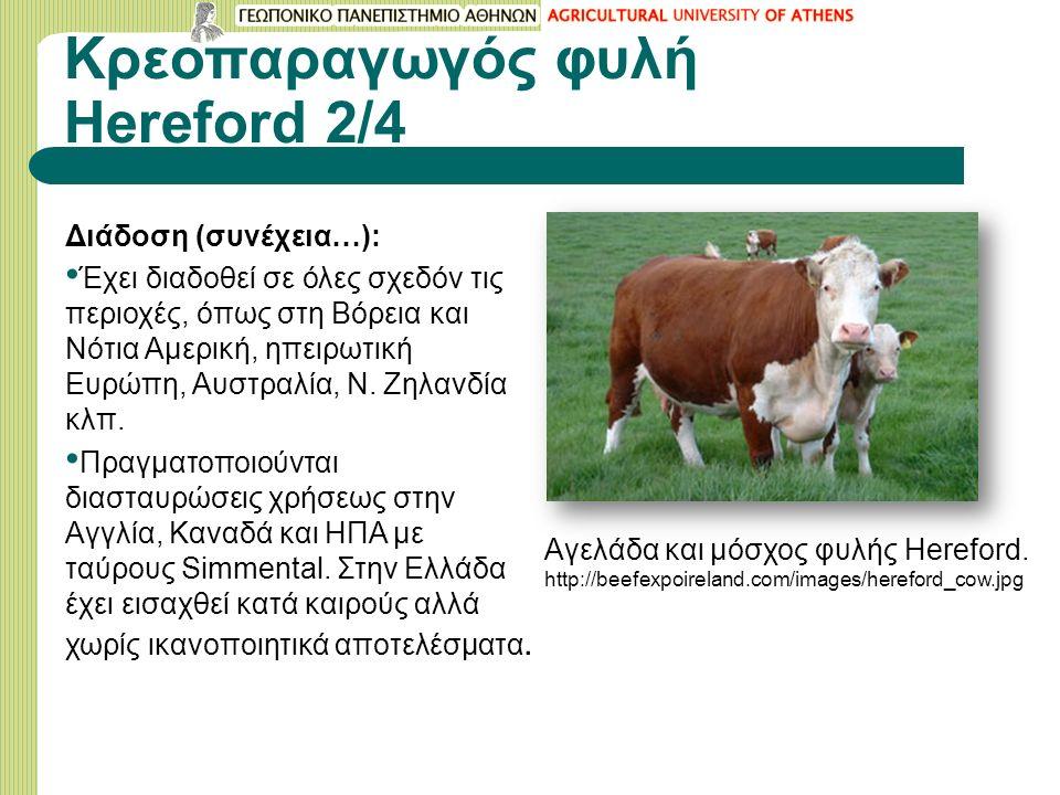 Κρεοπαραγωγός φυλή Hereford 2/4 Διάδοση (συνέχεια…): Έχει διαδοθεί σε όλες σχεδόν τις περιοχές, όπως στη Βόρεια και Νότια Αμερική, ηπειρωτική Ευρώπη, Αυστραλία, Ν.