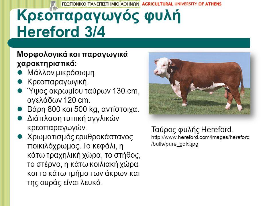 Κρεοπαραγωγός φυλή Hereford 3/4 Μορφολογικά και παραγωγικά χαρακτηριστικά: Μάλλον μικρόσωμη.