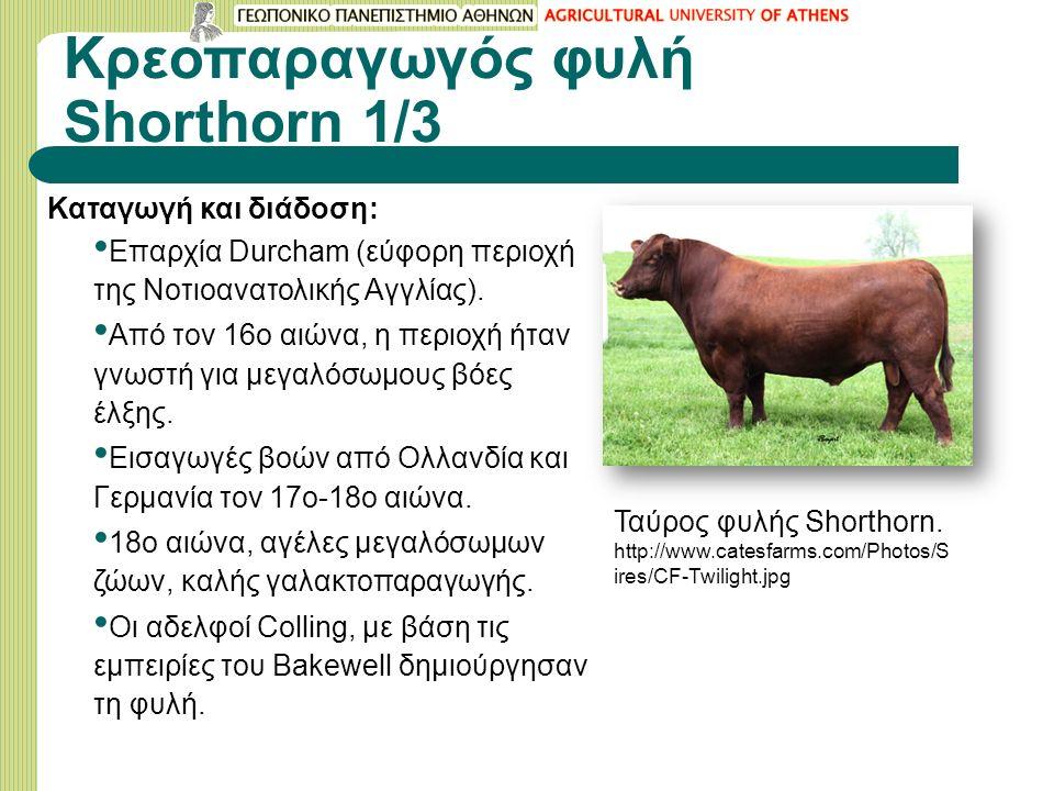 Κρεοπαραγωγός φυλή Shorthorn 1/3 Καταγωγή και διάδοση: Επαρχία Durcham (εύφορη περιοχή της Νοτιοανατολικής Αγγλίας).