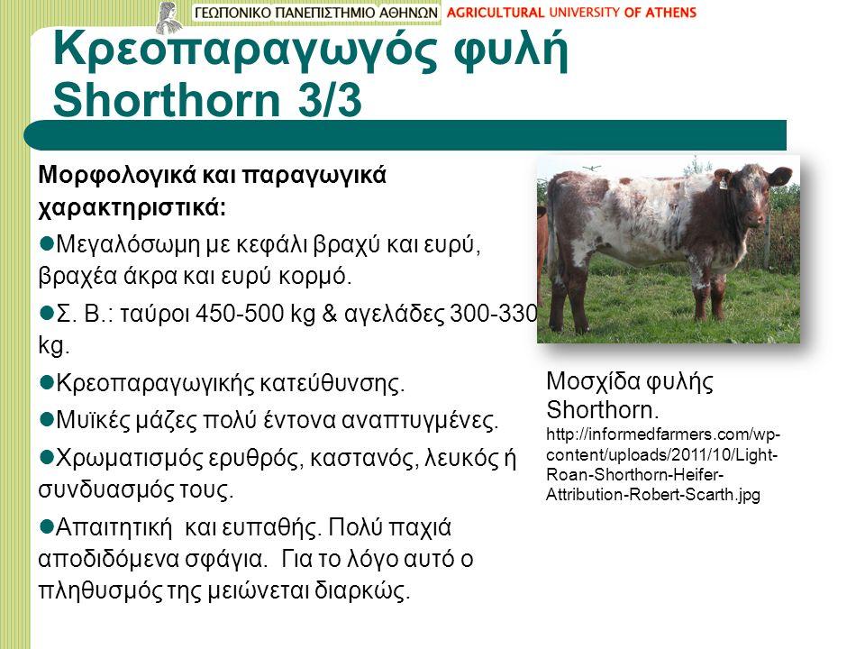 Κρεοπαραγωγός φυλή Shorthorn 3/3 Μορφολογικά και παραγωγικά χαρακτηριστικά: Μεγαλόσωμη με κεφάλι βραχύ και ευρύ, βραχέα άκρα και ευρύ κορμό.