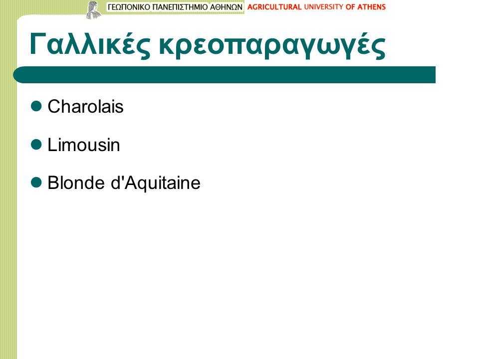 Γαλλικές κρεοπαραγωγές Charolais Limousin Blonde d Aquitaine