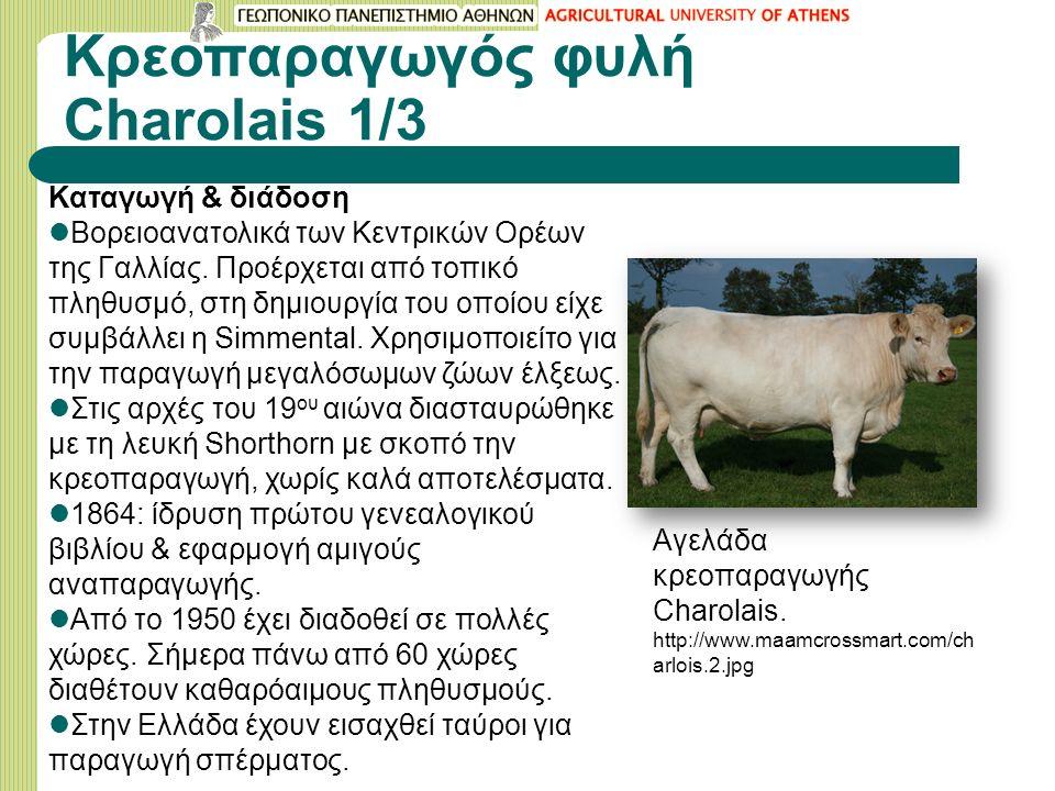 Κρεοπαραγωγός φυλή Charolais 1/3 Καταγωγή & διάδοση Βορειοανατολικά των Κεντρικών Ορέων της Γαλλίας.
