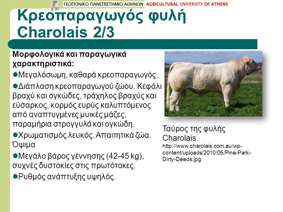 Κρεοπαραγωγός φυλή Charolais 2/3 Μορφολογικά και παραγωγικά χαρακτηριστικά: Μεγαλόσωμη, καθαρά κρεοπαραγωγός.