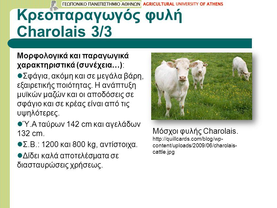 Κρεοπαραγωγός φυλή Charolais 3/3 Μορφολογικά και παραγωγικά χαρακτηριστικά (συνέχεια…): Σφάγια, ακόμη και σε μεγάλα βάρη, εξαιρετικής ποιότητας.