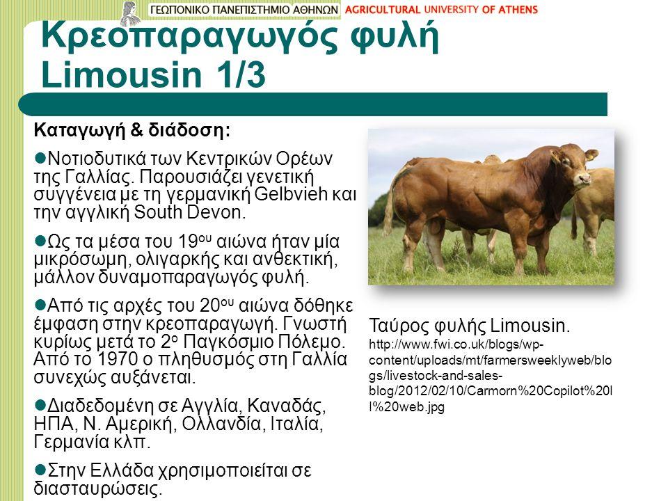 Κρεοπαραγωγός φυλή Limousin 1/3 Καταγωγή & διάδοση: Νοτιοδυτικά των Κεντρικών Ορέων της Γαλλίας.