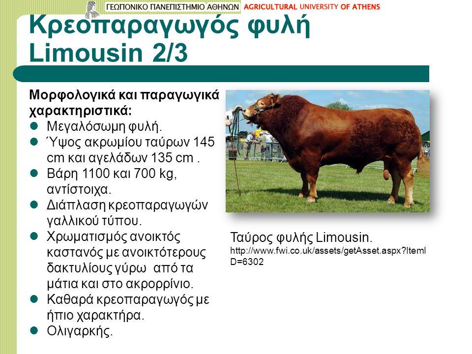 Κρεοπαραγωγός φυλή Limousin 2/3 Μορφολογικά και παραγωγικά χαρακτηριστικά: Μεγαλόσωμη φυλή.