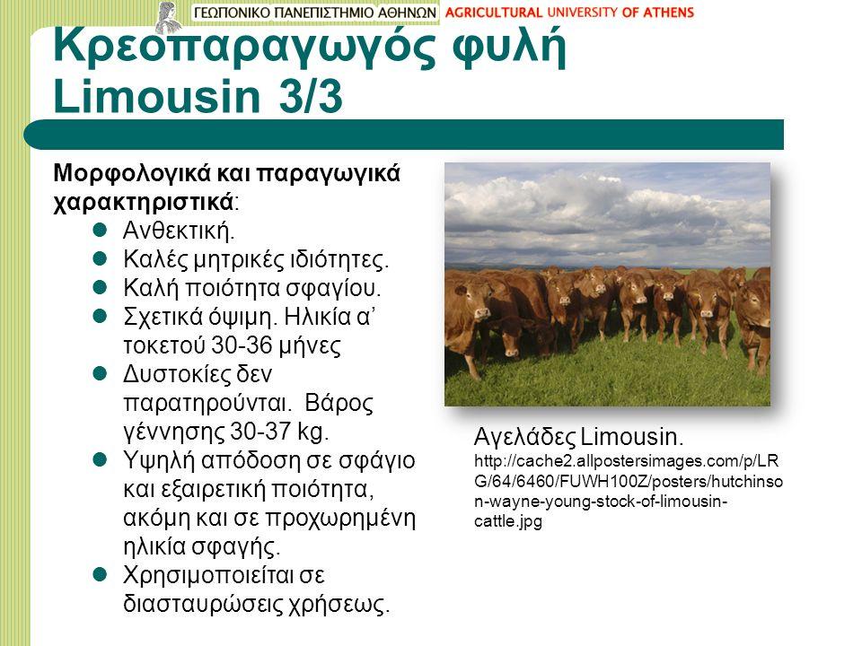 Κρεοπαραγωγός φυλή Limousin 3/3 Μορφολογικά και παραγωγικά χαρακτηριστικά: Ανθεκτική.