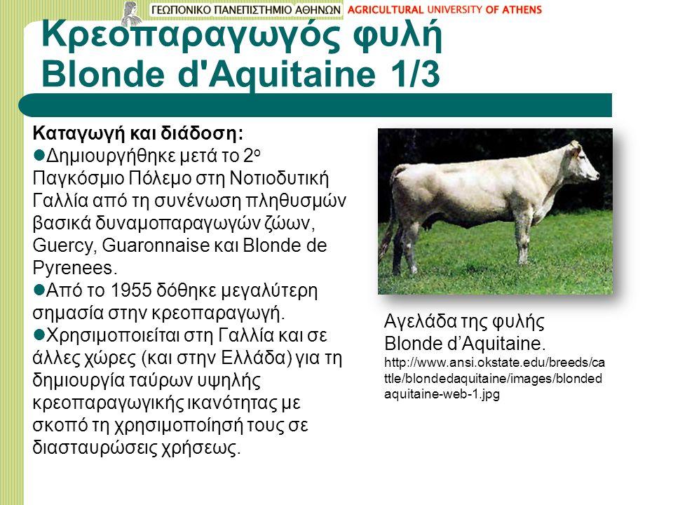 Κρεοπαραγωγός φυλή Blonde d Aquitaine 1/3 Καταγωγή και διάδοση: Δημιουργήθηκε μετά το 2 ο Παγκόσμιο Πόλεμο στη Νοτιοδυτική Γαλλία από τη συνένωση πληθυσμών βασικά δυναμοπαραγωγών ζώων, Guercy, Guaronnaise και Blonde de Pyrenees.