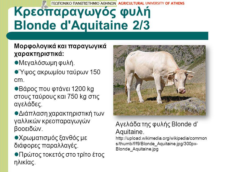 Κρεοπαραγωγός φυλή Blonde d Aquitaine 2/3 Μορφολογικά και παραγωγικά χαρακτηριστικά: Μεγαλόσωμη φυλή.