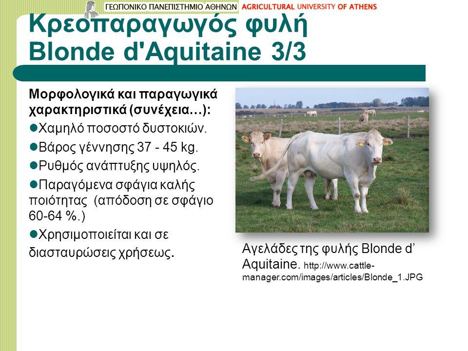 Κρεοπαραγωγός φυλή Blonde d Aquitaine 3/3 Μορφολογικά και παραγωγικά χαρακτηριστικά (συνέχεια…): Χαμηλό ποσοστό δυστοκιών.