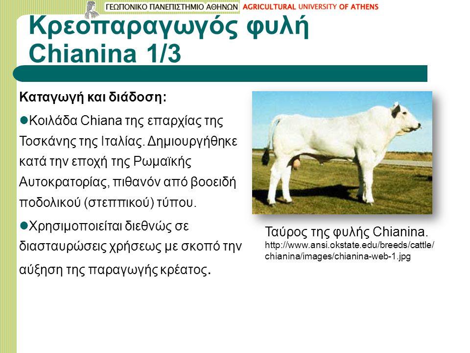 Κρεοπαραγωγός φυλή Chianina 1/3 Καταγωγή και διάδοση: Κοιλάδα Chiana της επαρχίας της Τοσκάνης της Ιταλίας.