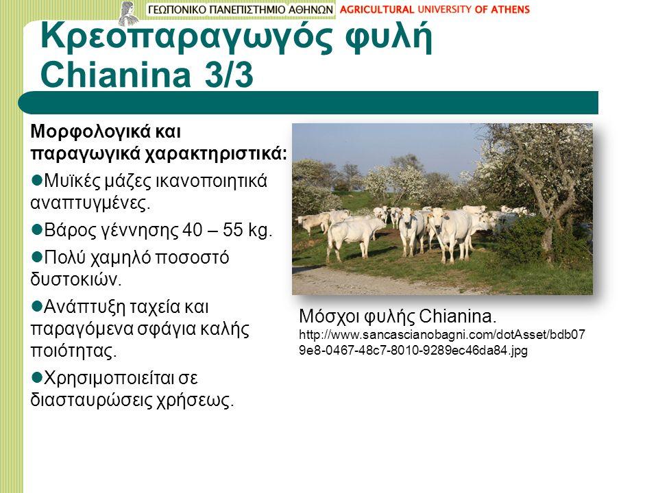 Κρεοπαραγωγός φυλή Chianina 3/3 Mορφολογικά και παραγωγικά χαρακτηριστικά: Μυϊκές μάζες ικανοποιητικά αναπτυγμένες.