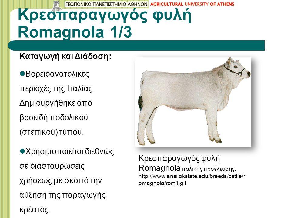 Κρεοπαραγωγός φυλή Romagnola 1/3 Καταγωγή και Διάδοση: Βορειοανατολικές περιοχές της Ιταλίας.