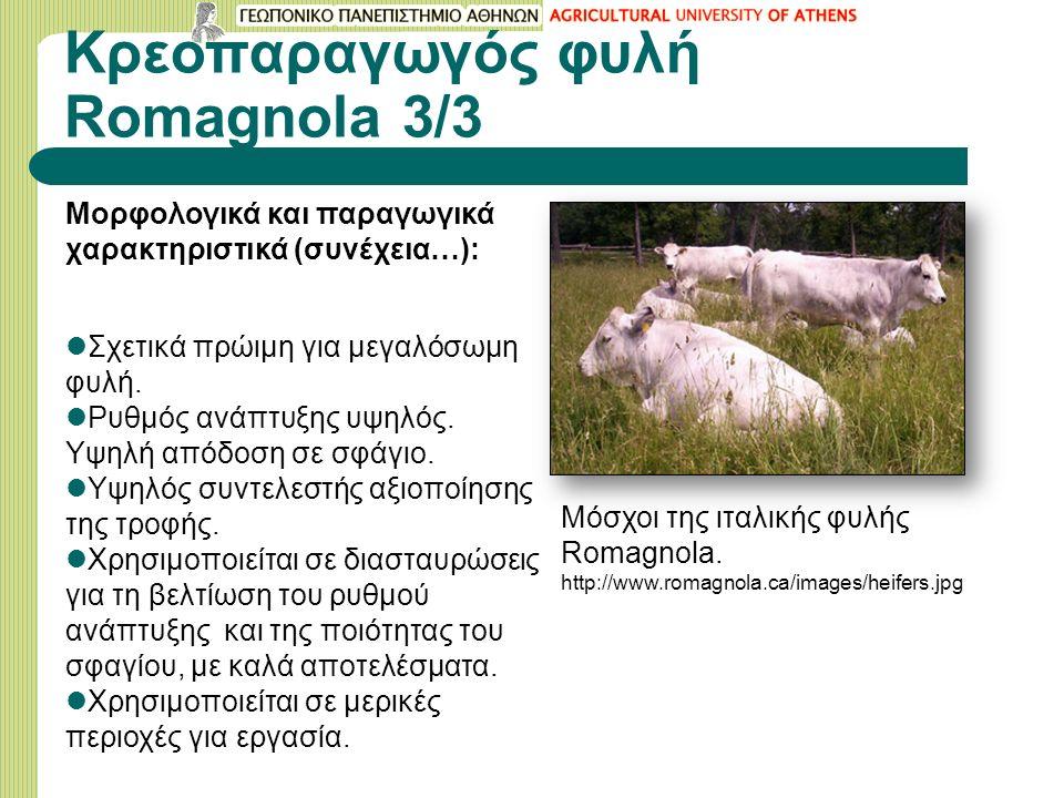 Κρεοπαραγωγός φυλή Romagnola 3/3 Μορφολογικά και παραγωγικά χαρακτηριστικά (συνέχεια…): Σχετικά πρώιμη για μεγαλόσωμη φυλή.