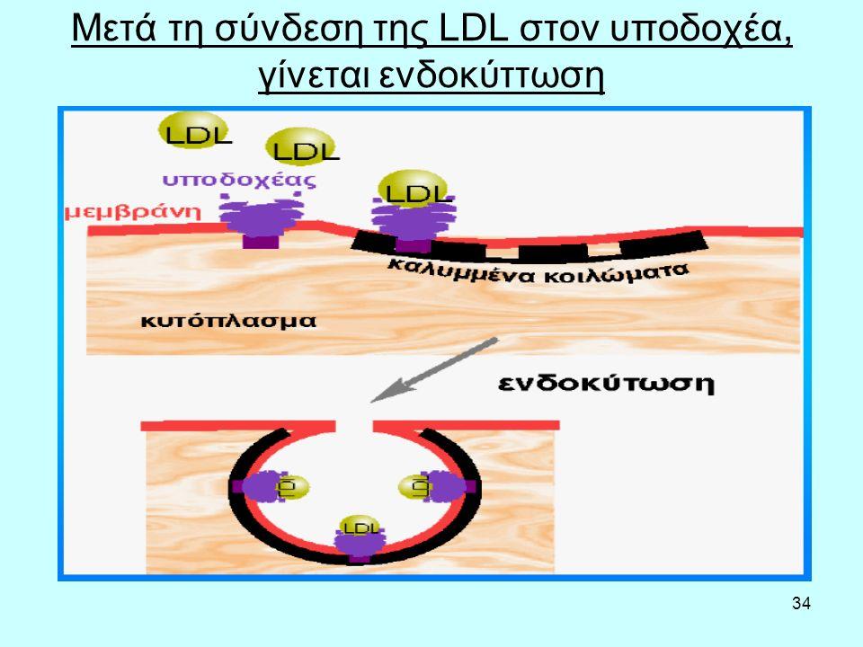 34 Μετά τη σύνδεση της LDL στον υποδοχέα, γίνεται ενδοκύττωση