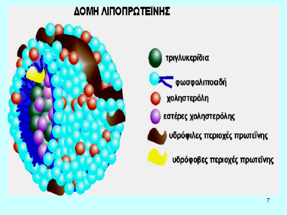 8 Λιποπρωτεΐνες Σωματίδια που βρίσκονται στο πλάσμα του αίματος και μεταφέρουν λιπίδια Κατηγορίες λιποπρωτεϊνών –Χυλομικρά: προσλαμβάνουν λιπίδια από το λεπτό έντερο μέσω των λεμφαγγείων, –Λιποπρωτεΐνες πολύ χαμηλής πυκνότητας (VLDL), –Λιποπρωτεΐνες ενδιάμεσης πυκνότητας (IDL), –Λιποπρωτεΐνες χαμηλής πυκνότητας (LDL), –Λιποπρωτεΐνες υψηλής πυκνότητας (HDL), –Λιποπρωτεΐνες πολύ υψηλής πυκνότητας (VHDL).