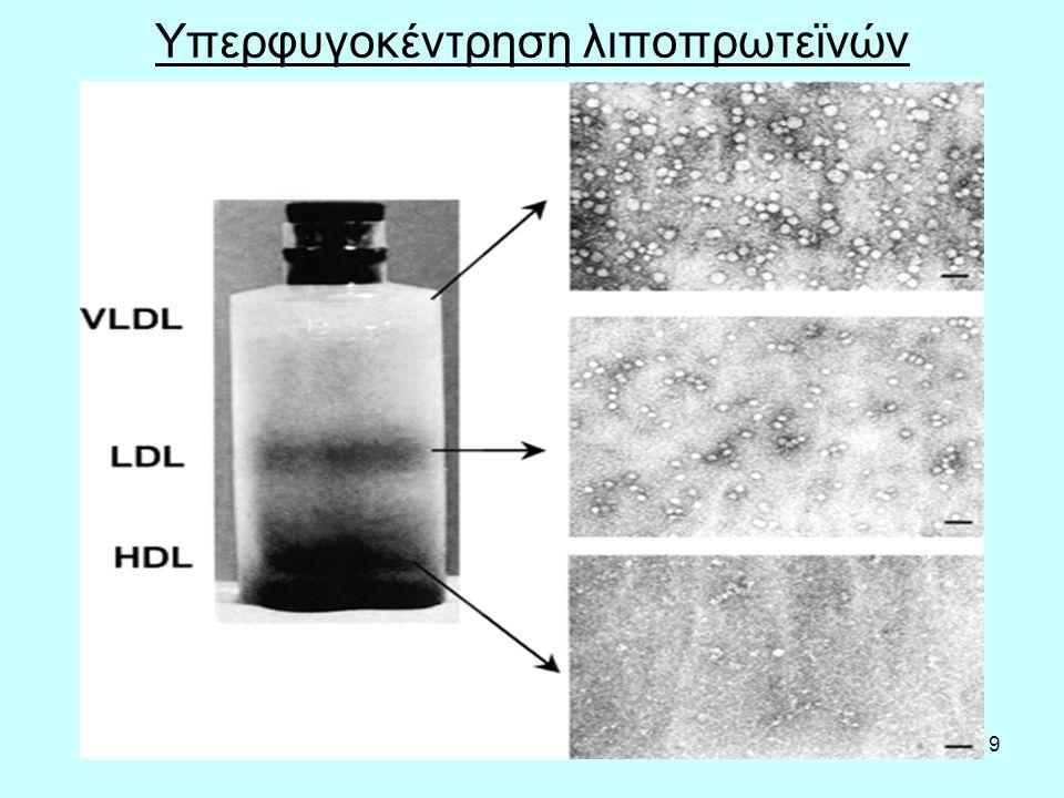 20 ΛΙΠΟΠΡΩΤΕΪΝΕΣ Οι LDL, IDL και VLDL είναι ομοειδείς και μεταφέρουν ενδογενή λιποειδή (τριγλυκερίδια, χοληστερόλη, φωσφολιποειδή) στους ιστούς από το ήπαρ.