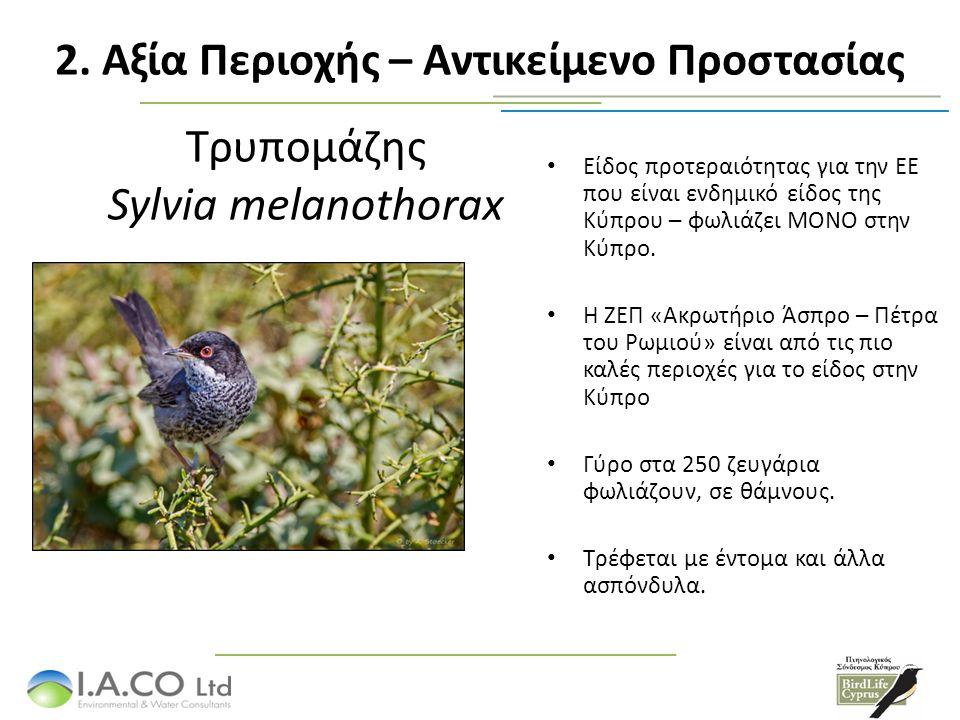 Τρυπομάζης Sylvia melanothorax Είδος προτεραιότητας για την ΕΕ που είναι ενδημικό είδος της Κύπρου – φωλιάζει ΜΟΝΟ στην Κύπρο. Η ΖΕΠ «Ακρωτήριο Άσπρο