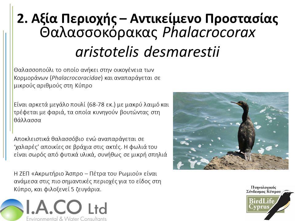Θαλασσοκόρακας Phalacrocorax aristotelis desmarestii Θαλασσοπούλι το οποίο ανήκει στην οικογένεια των Κορμοράνων (Phalacrocoracidae) και αναπαράγεται