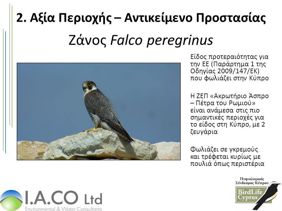 Ζάνος Falco peregrinus Είδος προτεραιότητας για την ΕΕ (Παράρτημα 1 της Οδηγίας 2009/147/ΕΚ) που φωλιάζει στην Κύπρο Η ΖΕΠ «Ακρωτήριο Άσπρο – Πέτρα το
