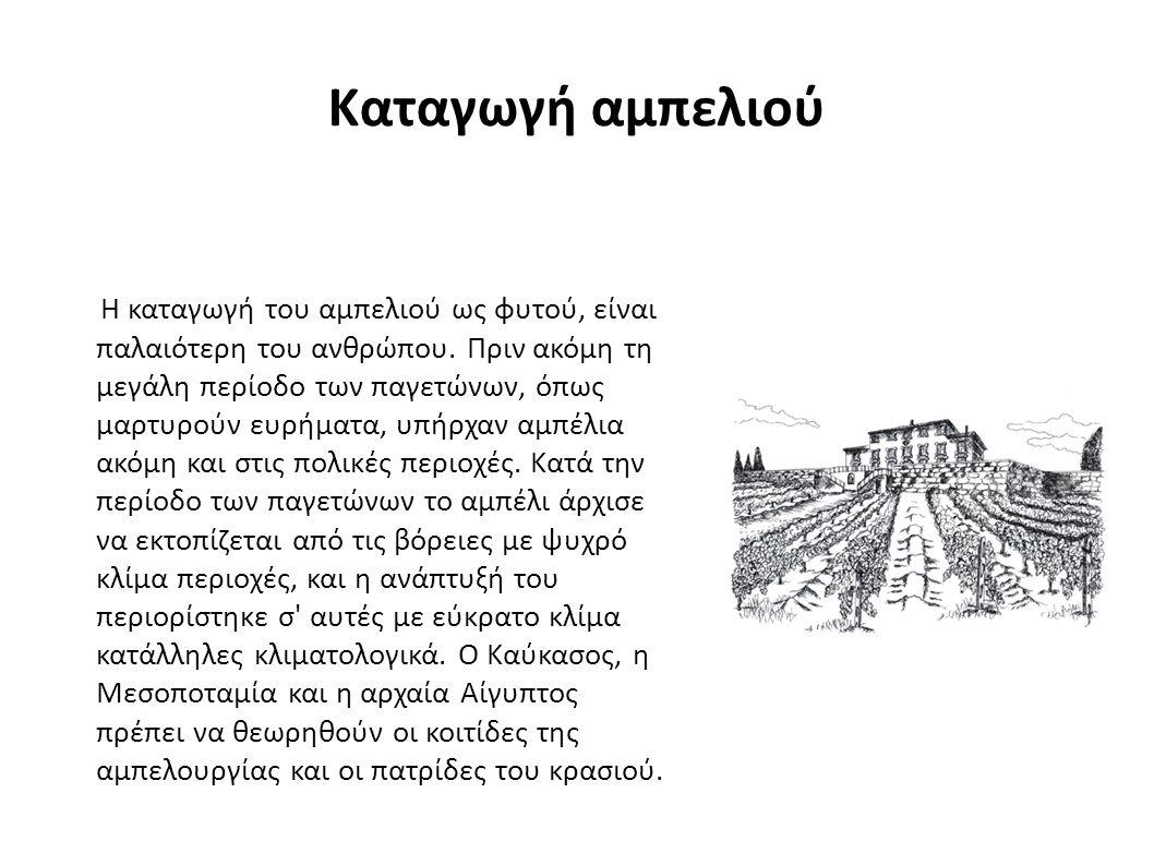 Καταγωγή αμπελιού Η καταγωγή του αμπελιού ως φυτού, είναι παλαιότερη του ανθρώπου.