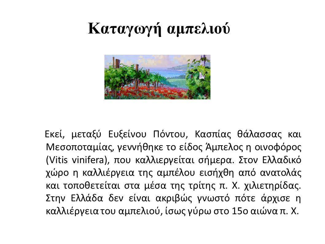 Καταγωγή αμπελιού Εκεί, μεταξύ Ευξείνου Πόντου, Κασπίας θάλασσας και Μεσοποταμίας, γεννήθηκε το είδος Άμπελος η οινοφόρος (Vitis vinifera), που καλλιεργείται σήμερα.