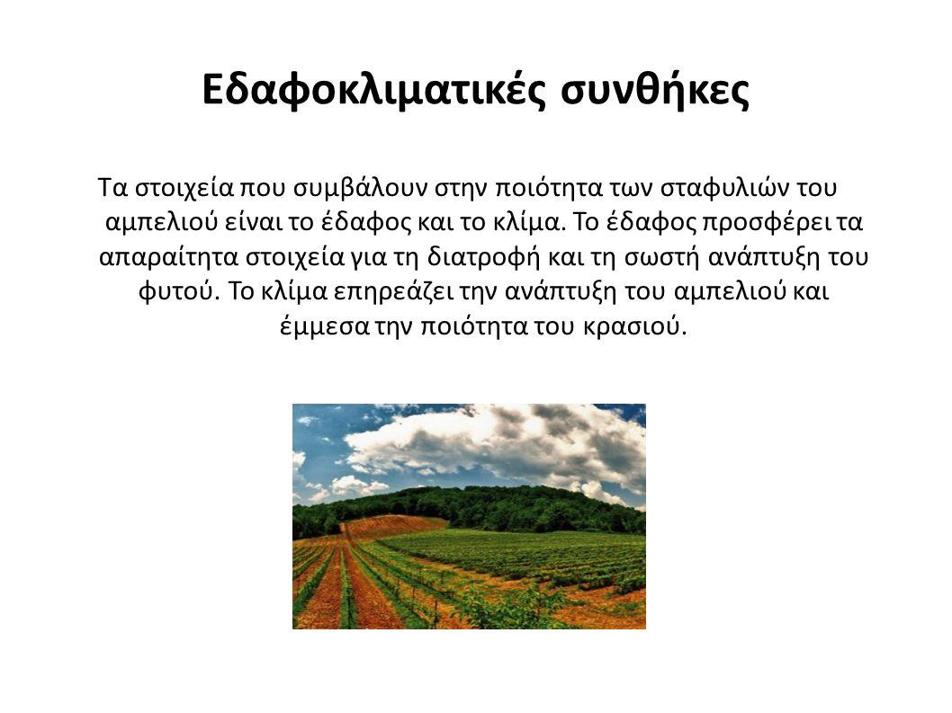 Εδαφοκλιματικές συνθήκες Τα στοιχεία που συμβάλουν στην ποιότητα των σταφυλιών του αμπελιού είναι το έδαφος και το κλίμα.