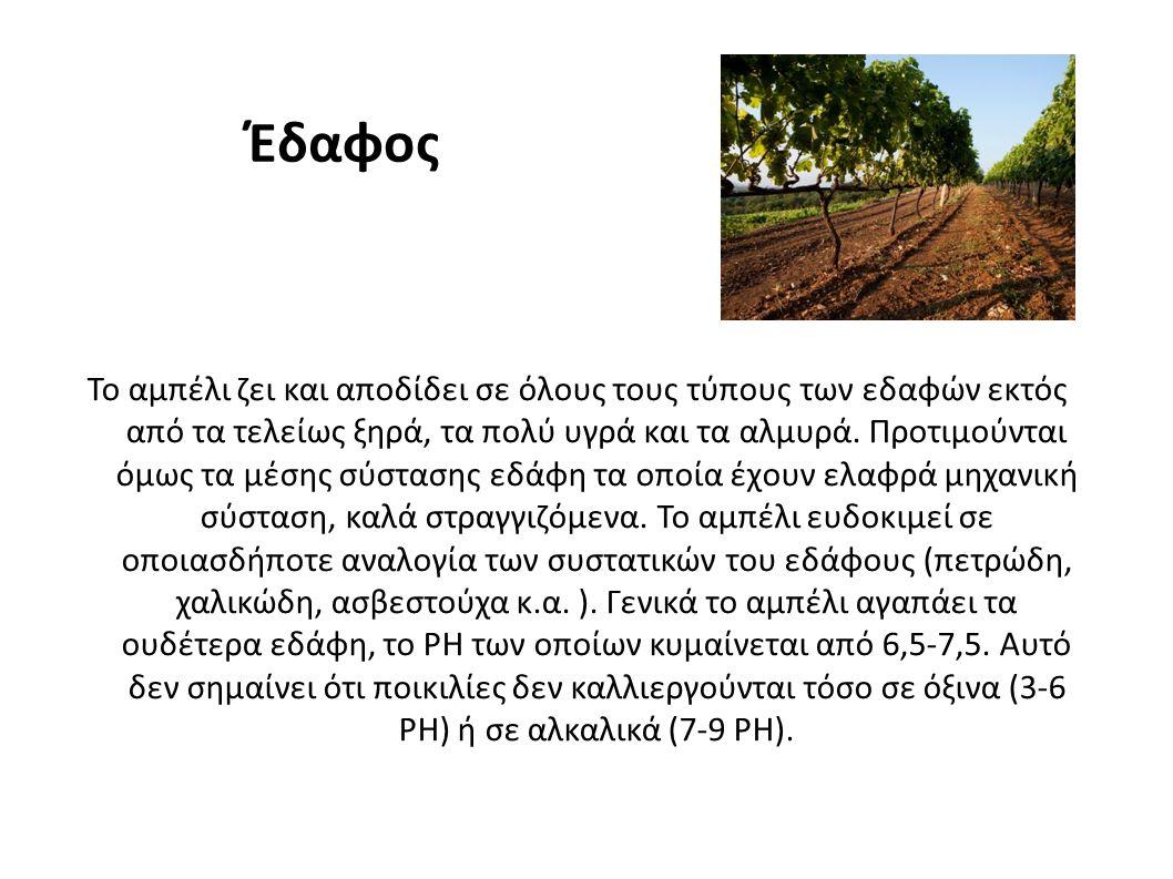 Έδαφος Το αμπέλι ζει και αποδίδει σε όλους τους τύπους των εδαφών εκτός από τα τελείως ξηρά, τα πολύ υγρά και τα αλμυρά.