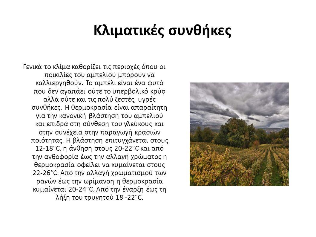 Κλιματικές συνθήκες Γενικά το κλίμα καθορίζει τις περιοχές όπου οι ποικιλίες του αμπελιού μπορούν να καλλιεργηθούν.