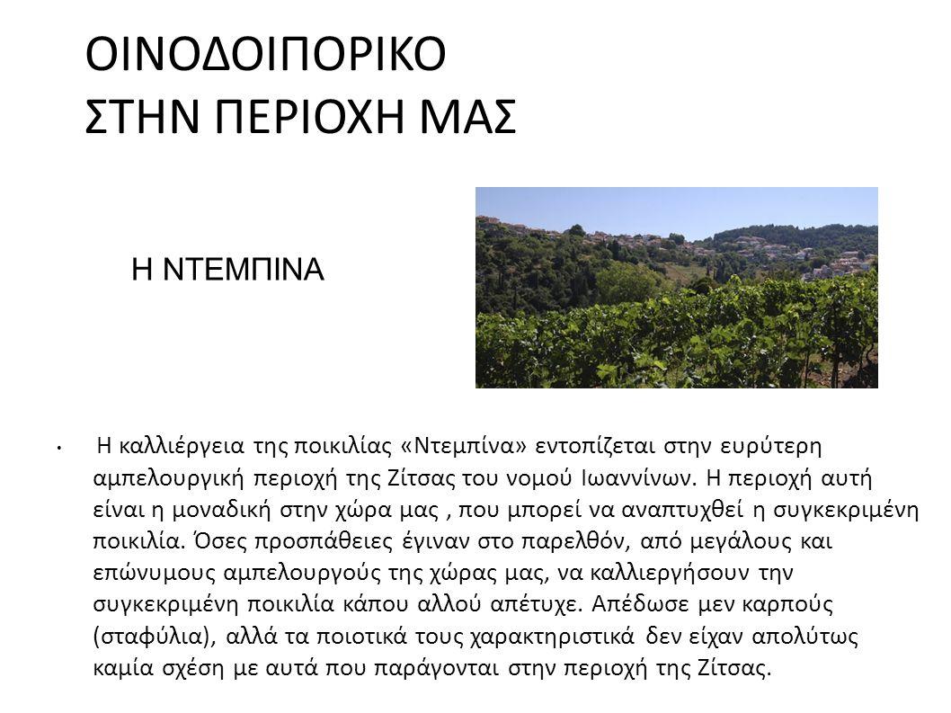 ΟΙΝΟΔΟΙΠΟΡΙΚΟ ΣΤΗΝ ΠΕΡΙΟΧΗ ΜΑΣ Η καλλιέργεια της ποικιλίας «Ντεμπίνα» εντοπίζεται στην ευρύτερη αμπελουργική περιοχή της Ζίτσας του νομού Ιωαννίνων.