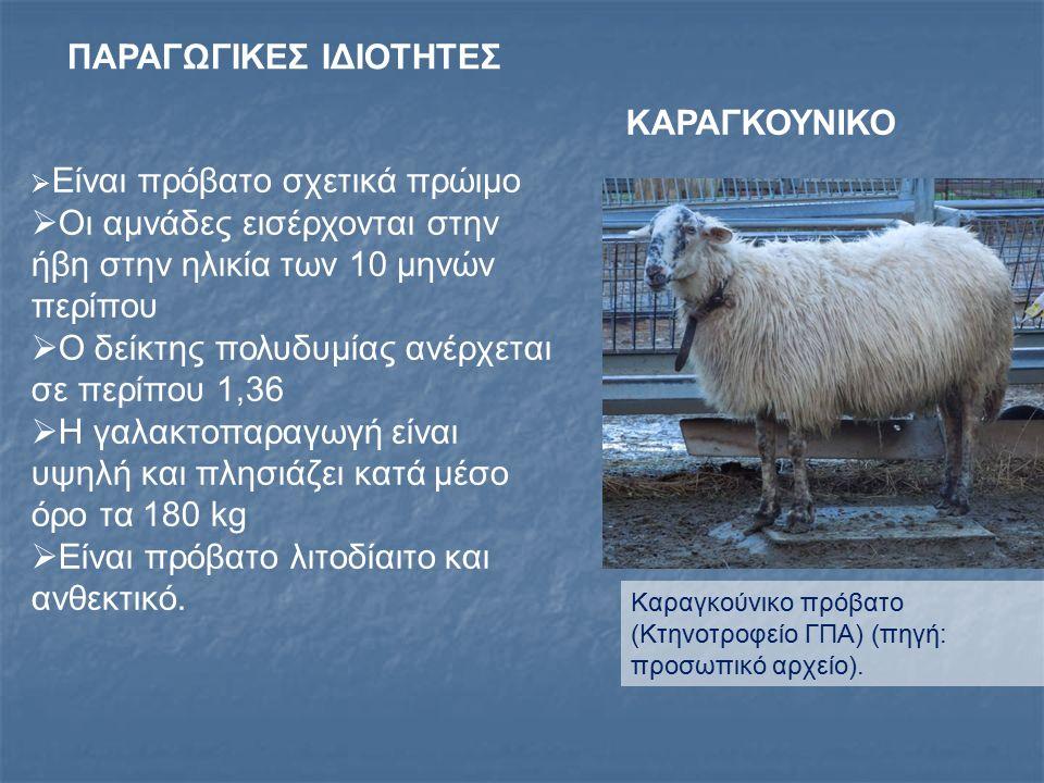 ΒΛΑΧΙΚΟ ΠΡΟΒΑΤΟ Συναντάται στις ορεινές περιοχές των Ιωαννίνων, Άρτας, Τρικάλων και ορισμένων άλλων νομών της Βορειοδυτικής Ελλάδας Σε αμιγή μορφή εκτρέφεται σε μικρό σχετικά αριθμό ποιμνίων στις ορεινές και δύσβατες περιοχές της Κεντρικής Πελοποννήσου Στην Ήπειρο και τη Θεσσαλία έχει επηρεαστεί από το Σαρακατσάνικο και το Γραμμουστιανό πρόβατο.